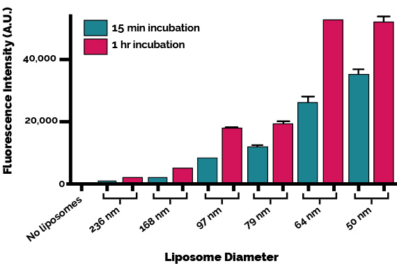 Size effects of liposomes for cellular uptake