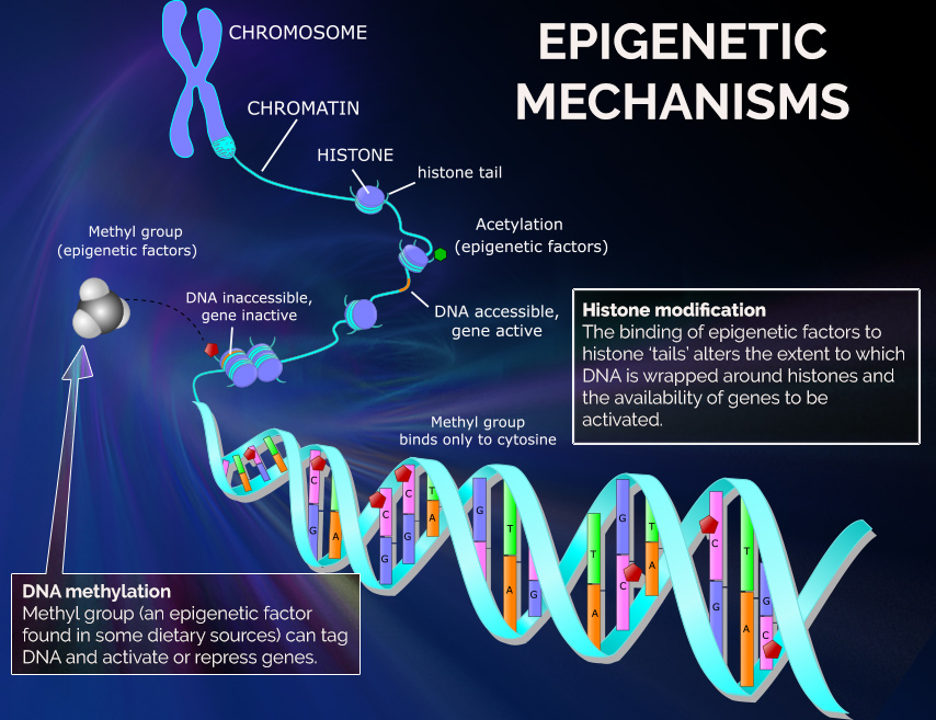 genetics epigenetics mechanisms