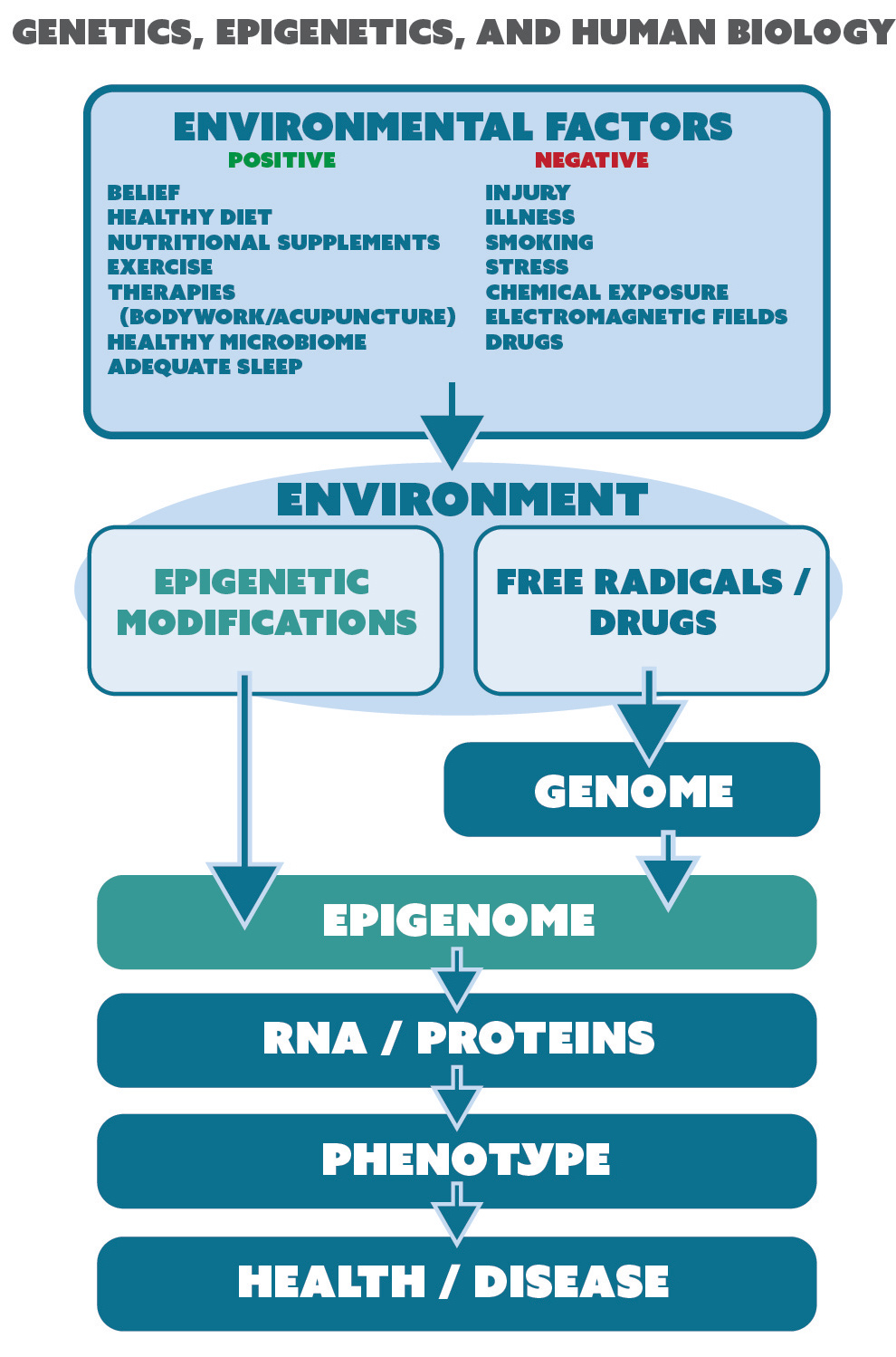 Genetics, Epigenetics, and Human Biology genetics