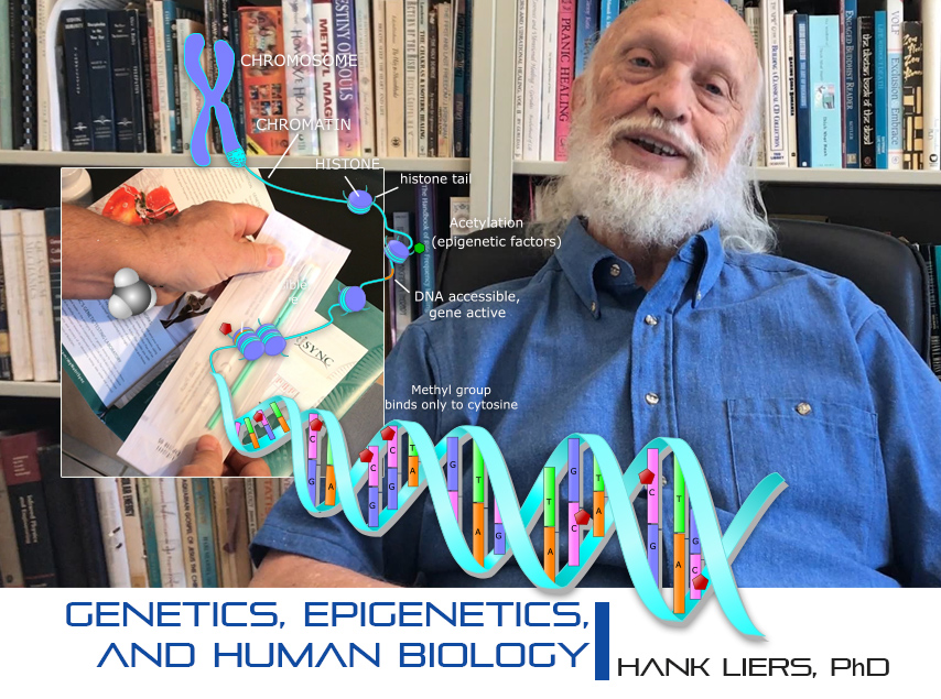 Genetics, Epigenetics, and Human Biology