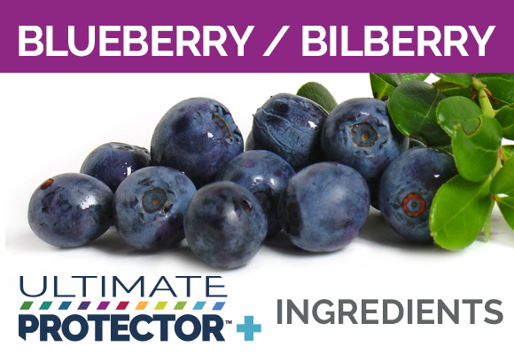 Ultimate Protector+ Includes Blueberry and Bilberry