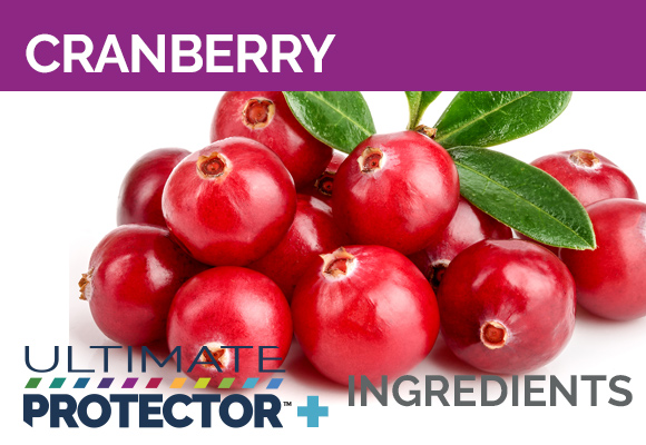 Ultimate Protector+ Includes Cranberry