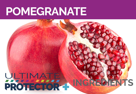 Ultimate Protector+ Includes Pomegranate